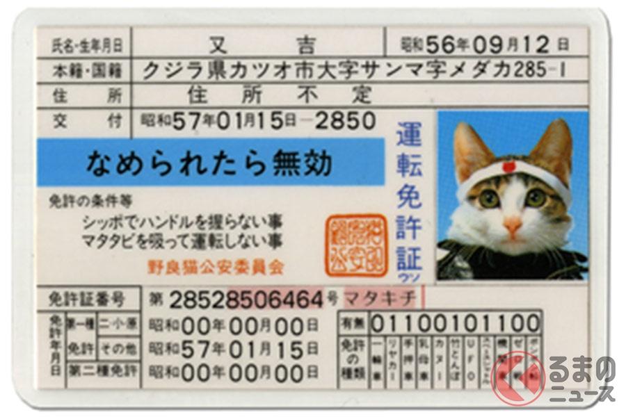 なめ猫といえば「なめ猫免許証」。当時持っている人も多かったはず