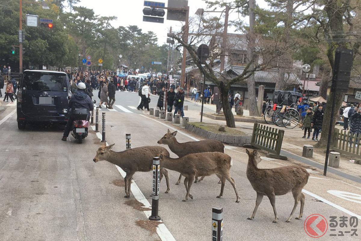 道路を自由に横断するシカ様。 その様子に誰もが注目してしまう!