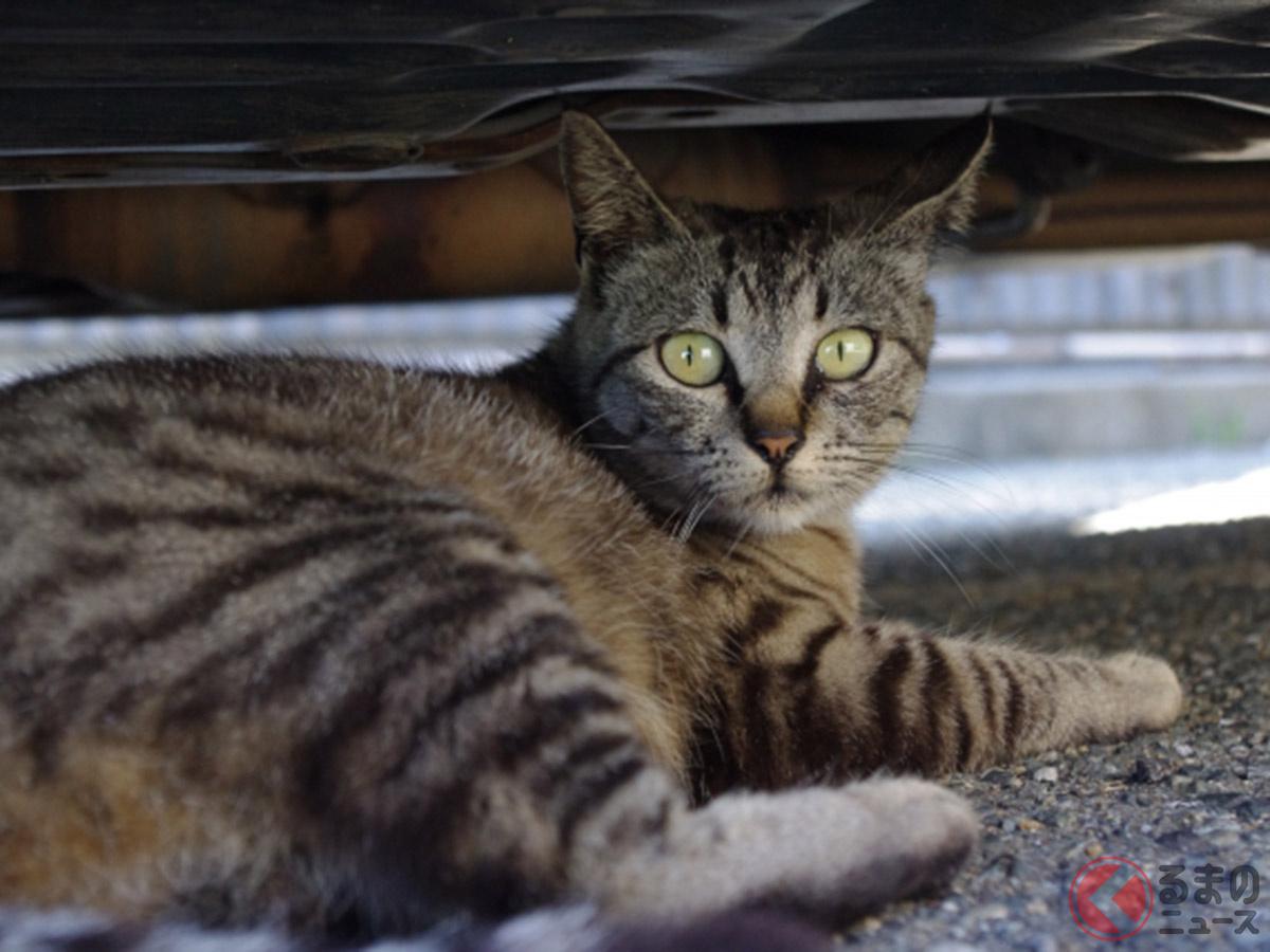 猫がクルマに入り込むイメージ