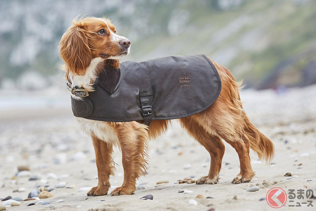 愛犬を雨や風から守ってくれるワックスジャケット