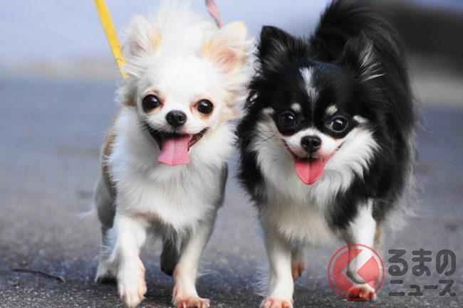 愛犬家としてあり得ない」 自転車に乗りながら犬の散歩は道交法違反か ...