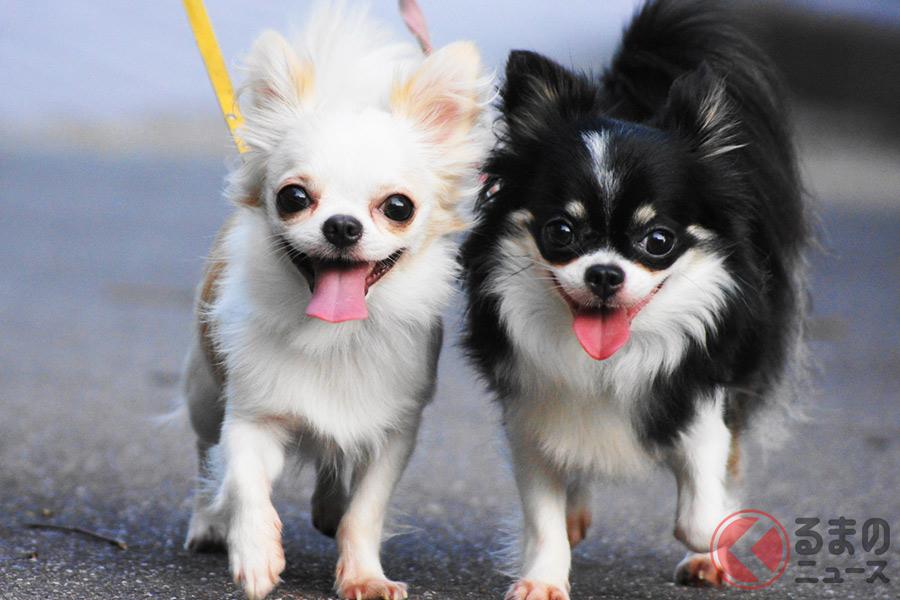 犬の散歩時に気をつけるべきこととは
