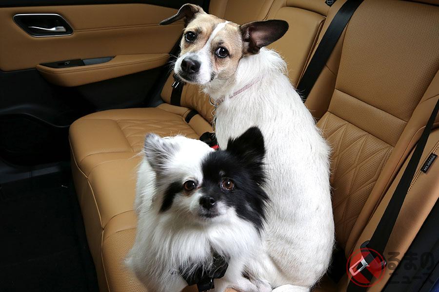 ペットを正しく乗車させないと危険