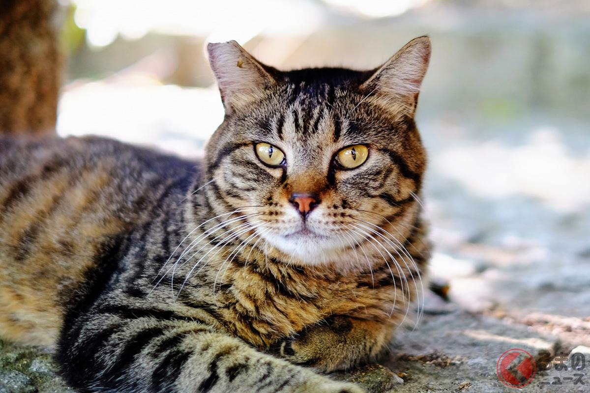 猫が交通事故に遭いやすい理由とは?